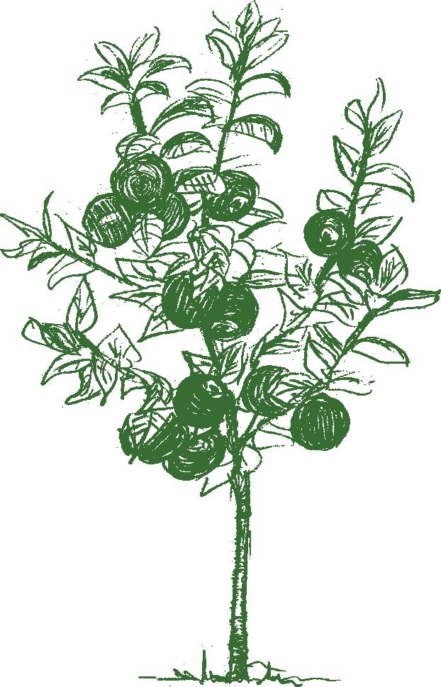 Apfelbaum mit Naturmeister gedüngt